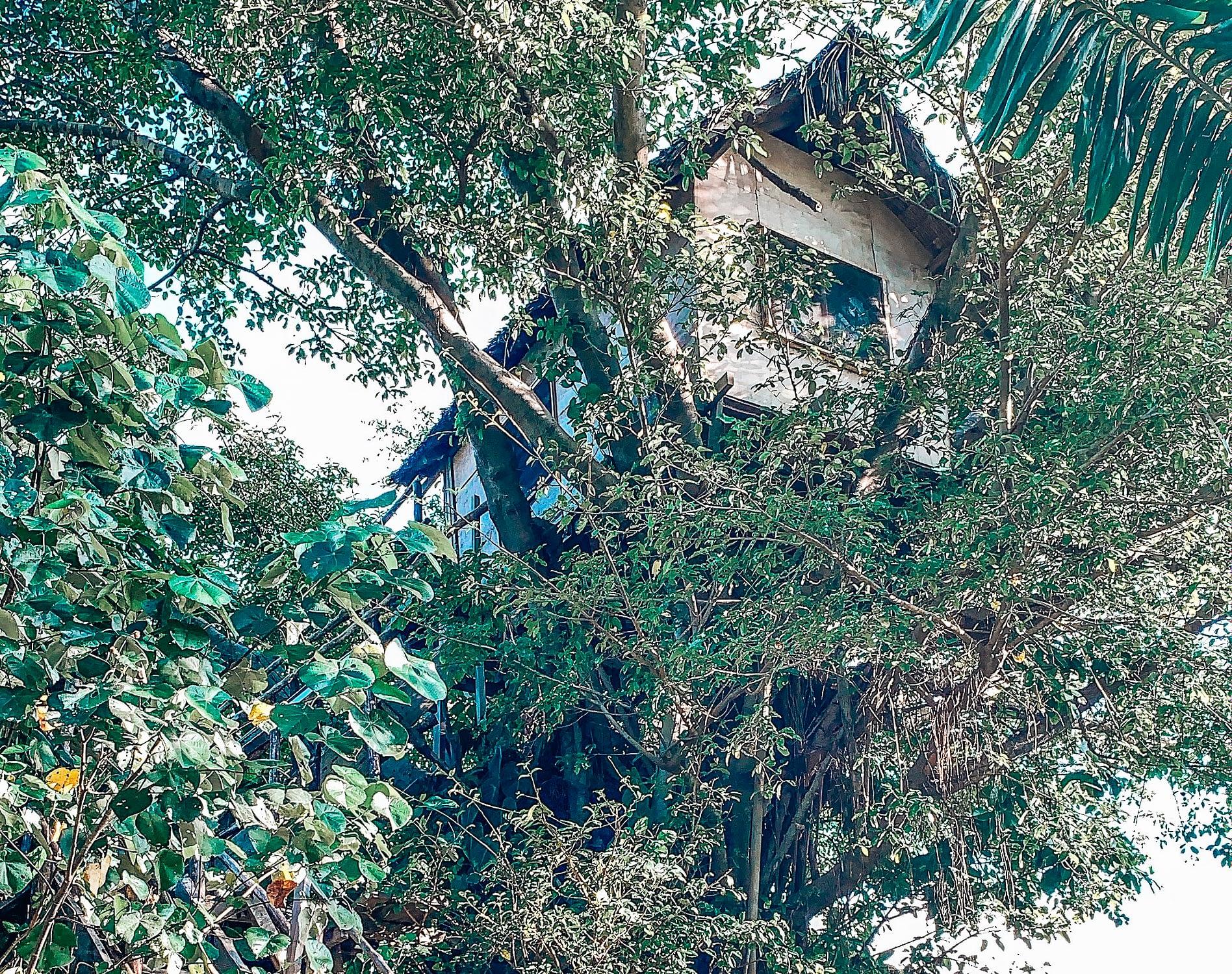 Treehouse Vanuatu
