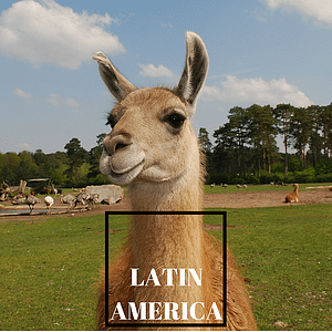 Image of llama, link to Latin America Guides