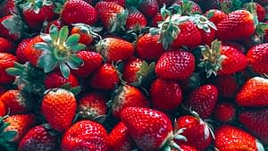88 days of farm work - Tray of strawberries