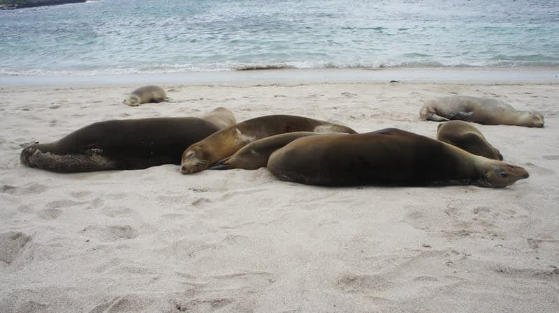 How to Visit the Galapagos on a Budget