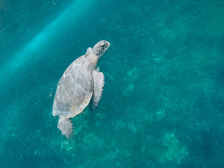 Small turtle swimming in the ocean