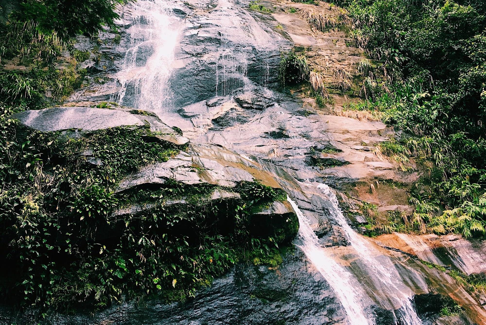 Tijuca Rainforest Rio Brazil