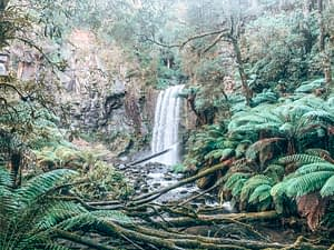 Hopetoun Falls - Cape Otway - Great Ocean Road Recommended Stops