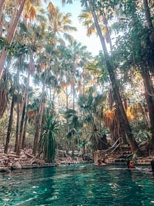 Mataranka Bitter Springs - Image of natural swimming pool surrounded by tall trees