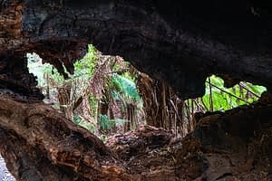 Melba Gully Glow Worms Cave - Great Ocean Road Hidden Secrets
