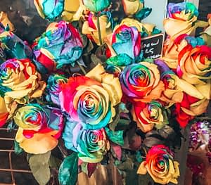 Bouquet of rainbow coloured roses