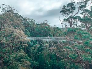 The Giant Tree Top Walk - South West Australia